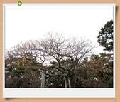 2010日本東京京都大阪自助DAY4-京都御所:IMG_5659.jpg