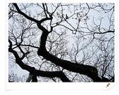2010日本東京京都大阪自助DAY4-京都御所:IMG_5660.jpg
