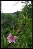 20120324~25阿貴營地+山上人家:P1090122.jpg
