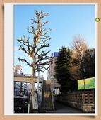 2010日本東京京都大阪自助(0123築地早餐+歌舞伎座一幕見席):IMG_4826.jpg