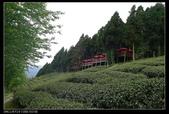 20120324~25阿貴營地+山上人家:P1090351.jpg