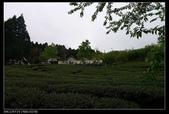 20120324~25阿貴營地+山上人家:P1090353.jpg