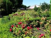 2013紐西蘭超LUCKY跳跳之旅-DAY3克倫威爾水果小鎮&南緯45度:P1140176.jpg