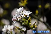 97.03.27藍天‧海芋‧竹子湖:nEO_IMG_IMGP7124.jpg