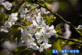 97.03.27藍天‧海芋‧竹子湖:nEO_IMG_IMGP7125.jpg