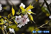 97.03.27藍天‧海芋‧竹子湖:nEO_IMG_IMGP7126.jpg