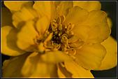 97.02.16植物園微距:nEO_IMG_IMGP5356.jpg