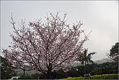 98.03.05天元宮‧吉野櫻進行式:nEO_IMG_IMGP6619.jpg