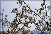 97.03.27藍天‧海芋‧竹子湖:nEO_IMG_IMGP7127.jpg
