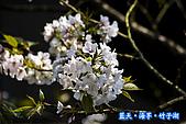 97.03.27藍天‧海芋‧竹子湖:nEO_IMG_IMGP7128.jpg