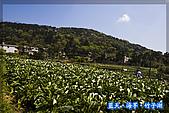 97.03.27藍天‧海芋‧竹子湖:nEO_IMG_IMGP7024.jpg