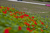 2009台北花卉展花草集:nEO_IMG_IMGP3057.jpg