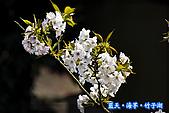 97.03.27藍天‧海芋‧竹子湖:nEO_IMG_IMGP7129.jpg