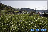 97.03.27藍天‧海芋‧竹子湖:nEO_IMG_IMGP7025.jpg