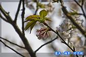 97.03.27藍天‧海芋‧竹子湖:nEO_IMG_IMGP7130.jpg