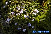 97.03.27藍天‧海芋‧竹子湖:nEO_IMG_IMGP7026.jpg