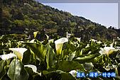 97.03.27藍天‧海芋‧竹子湖:nEO_IMG_IMGP7028.jpg