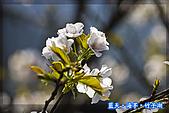 97.03.27藍天‧海芋‧竹子湖:nEO_IMG_IMGP7131.jpg