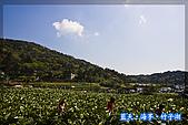 97.03.27藍天‧海芋‧竹子湖:nEO_IMG_IMGP7030.jpg