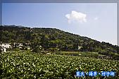 97.03.27藍天‧海芋‧竹子湖:nEO_IMG_IMGP7031.jpg