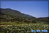 97.03.27藍天‧海芋‧竹子湖:nEO_IMG_IMGP7032.jpg