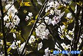97.03.27藍天‧海芋‧竹子湖:nEO_IMG_IMGP7133.jpg