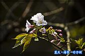 97.03.27藍天‧海芋‧竹子湖:nEO_IMG_IMGP7134.jpg