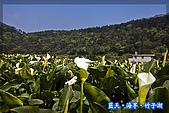 97.03.27藍天‧海芋‧竹子湖:nEO_IMG_IMGP7034.jpg