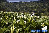 97.03.27藍天‧海芋‧竹子湖:nEO_IMG_IMGP7035.jpg