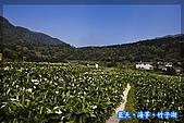 97.03.27藍天‧海芋‧竹子湖:nEO_IMG_IMGP7036.jpg
