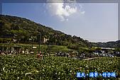 97.03.27藍天‧海芋‧竹子湖:nEO_IMG_IMGP7037.jpg