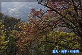 97.03.27藍天‧海芋‧竹子湖:nEO_IMG_IMGP7135.jpg