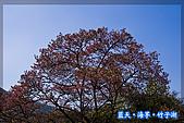 97.03.27藍天‧海芋‧竹子湖:nEO_IMG_IMGP7136.jpg