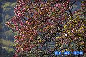 97.03.27藍天‧海芋‧竹子湖:nEO_IMG_IMGP7137.jpg