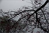 98.02.28竹子湖:nEO_IMG_IMGP6426.jpg