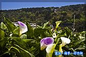 97.03.27藍天‧海芋‧竹子湖:nEO_IMG_IMGP7042.jpg