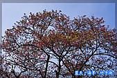 97.03.27藍天‧海芋‧竹子湖:nEO_IMG_IMGP7138.jpg