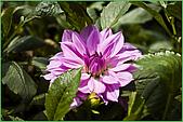 97.04.05(1)大屯花卉農場:nEO_IMG_IMGP7505.jpg