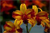 2009台北國際花卉展:花草集:nEO_IMG_IMGP7042.jpg