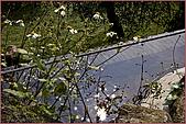 97.04.05(2)緣道觀音廟:nEO_IMG_IMGP7602.jpg