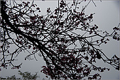 98.02.28竹子湖:nEO_IMG_IMGP6427.jpg