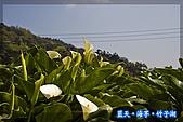97.03.27藍天‧海芋‧竹子湖:nEO_IMG_IMGP7043.jpg