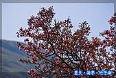 97.03.27藍天‧海芋‧竹子湖:nEO_IMG_IMGP7139.jpg