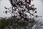 98.02.28竹子湖:nEO_IMG_IMGP6428.jpg