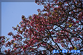 97.03.27藍天‧海芋‧竹子湖:nEO_IMG_IMGP7140.jpg