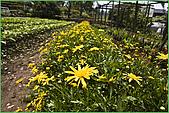 97.04.05(1)大屯花卉農場:nEO_IMG_IMGP7514.jpg