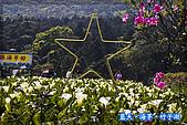 97.03.27藍天‧海芋‧竹子湖:nEO_IMG_IMGP7045.jpg