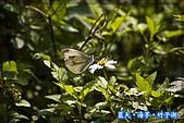 97.03.27藍天‧海芋‧竹子湖:nEO_IMG_IMGP7141.jpg