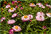 97.04.05(1)大屯花卉農場:nEO_IMG_IMGP7517.jpg