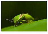 97.09.06富陽自然生態公園:cc10.jpg
